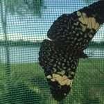 Butterflies Bolivian Jungle