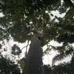 Oje Arbol en Aquicuana Reserva