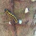 Caterpillar Amazon Jungle