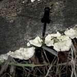 Dragonfly on a mushroom