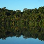 Bolivian-Amazon-Jungle