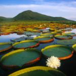 Pantanal-Bolivia-Amazon